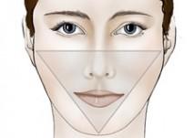Ansigtets konturer